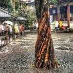 三十九番札所 延光寺(えんこうじ) 赤亀が背中に銅の梵鐘を背負ってきたというお寺、亀の印が人気 #39Enkoji