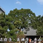 七十番札所 本山寺 (もとやまじ)四国霊場では竹林寺・志度寺・善通寺とこの本山寺の4ヶ所だけという五重塔 #70 Motoyamaji